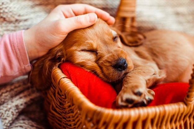 ردياب حيوانات - ردياب سگ